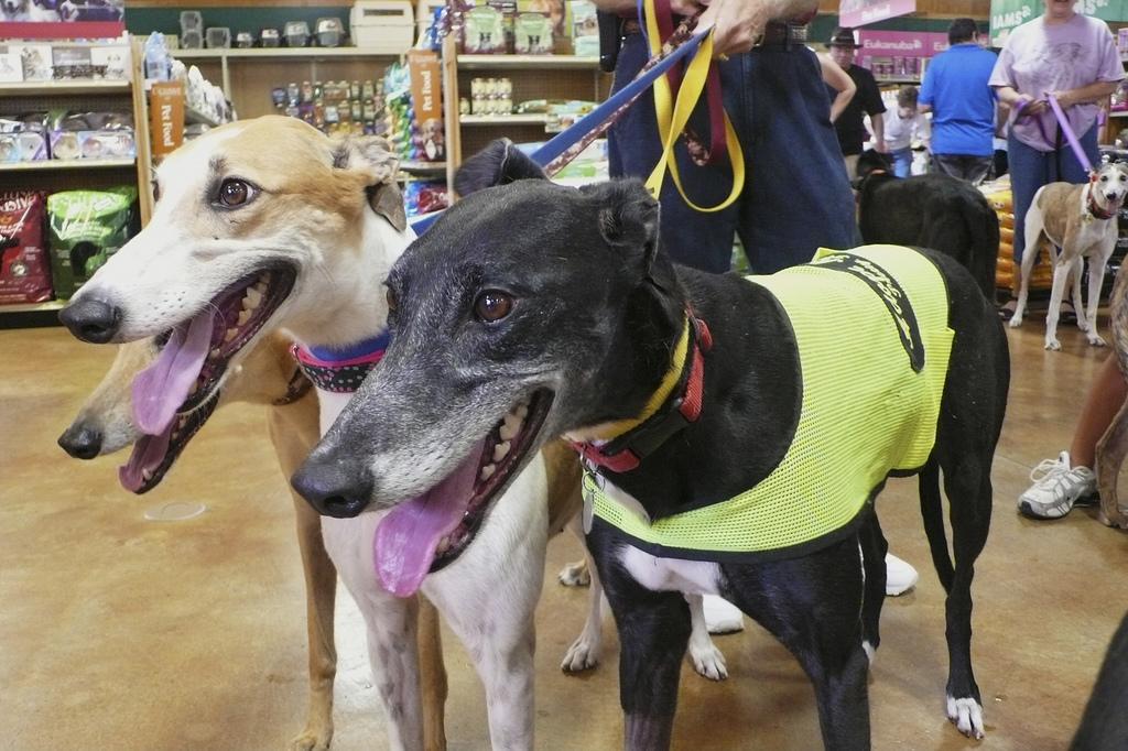 greyhound meet and greet virginia